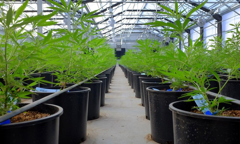 GrowGeneration Corp (NASDAQ:GRWG) has announced two new leases in Los Angeles County, California; the leases will act as the sites for the company's
